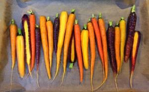 Tricolored carrots